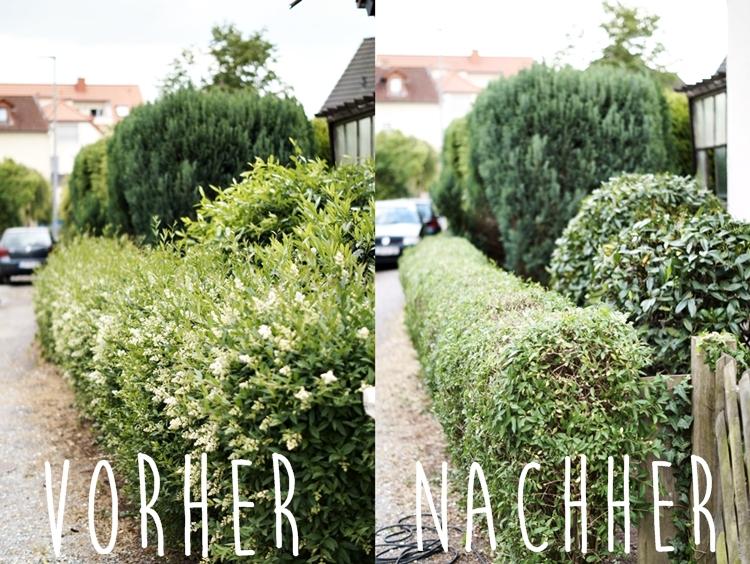 Collage von vorher und nachher Ligusterhecke { by it's me! }