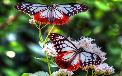 Taman Kupu-kupu Melaka