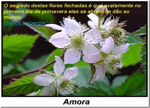 Flores que rendem frutos em poesia!