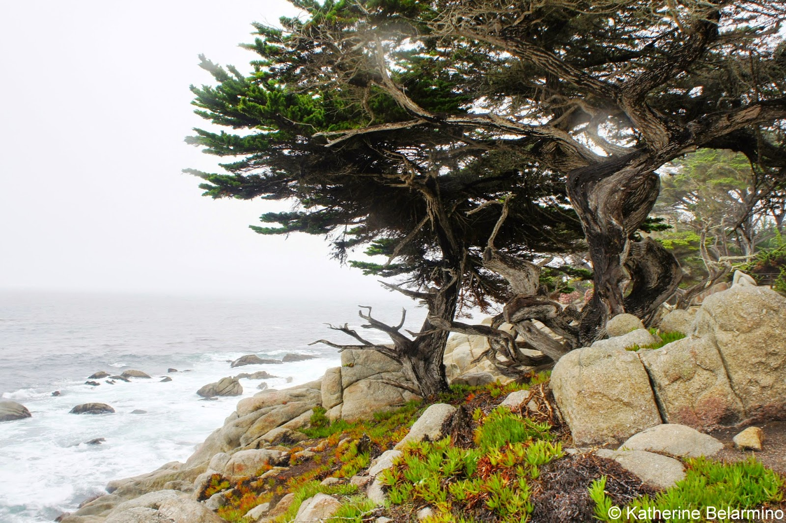 The Scenic 17 Mile Drive Of The Monterey Peninsula