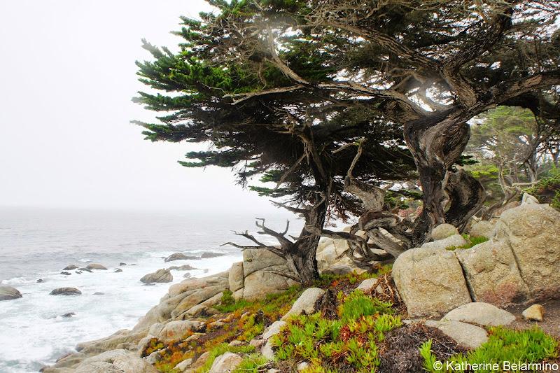 Pescadero Point 17-Mile Drive Monterey Peninsula California