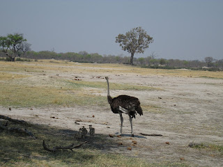 Hwange national parktours