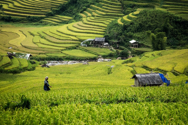 4 Must Try Things When Traveling to Mu Cang Chai terraced fields2