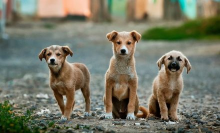 To kill or maim animals, including stray animals is a punishable offence. IPC sections 428 and 429 lawescort