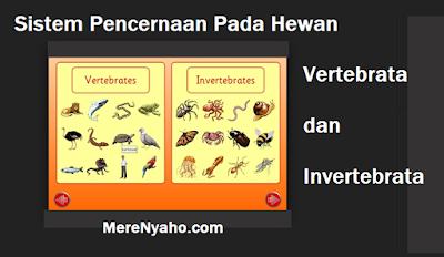 Sistem Pencernaan Pada Hewan VERTEBRATA dan Sistem pencernaan pada Hewan INVERTEBRATA