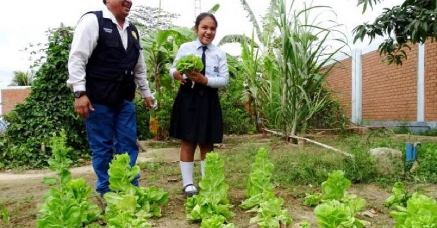 Escolares de Tumbes destacan por el buen uso del agua en sus huertos escolares promovidos por el Midis Qali Warma - www.qaliwarma.gob.pe