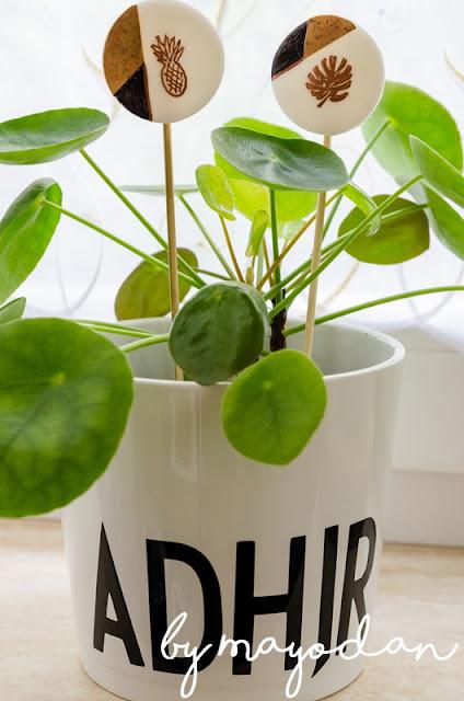Zimmerpflanzen Freundschaftspflanze