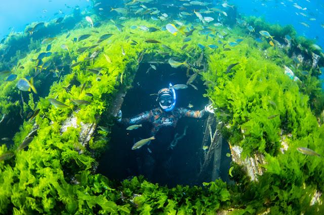 Fauna e Flora das Ilhas Juan Fernández no Chile