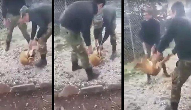 ΣΤΟ ΣΤΡΑΤΟΔΙΚΕΙΟ οι φαντάροι που πέταξαν τον σκύλο στο γκρεμό...
