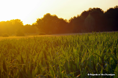 soleil couchant sur la campagne