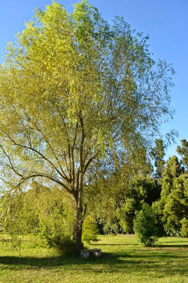 Aporte de los árboles al planeta, carbono, ecología, calentamiento global y bosques.