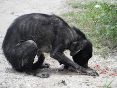 Street Dogs At Lake Atitlan Need Help!