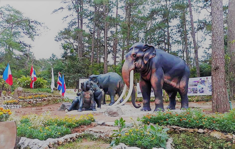 New Attraction In Botanical Garden: 5 Feet Tall Elephant Statues From  Thailand