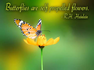inspirational-quotes-butterfly-effect-6