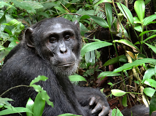 9 Days Bwindi Gorilla Trekking Lake Bunyonyi-Queen National Park