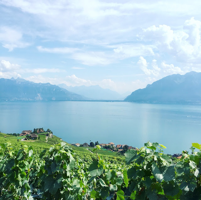 View from Chexbres in Lavaux, the wine terraces of Switzerland