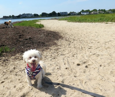 Gardiner County Park and Beach is dog friendly!  #dogfriendly