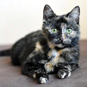 kot, koty do adopcji, Wroclaw