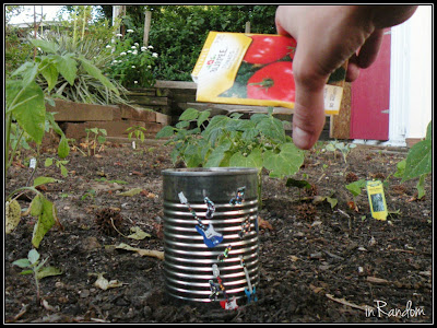 Planting Seeds in a Can #4