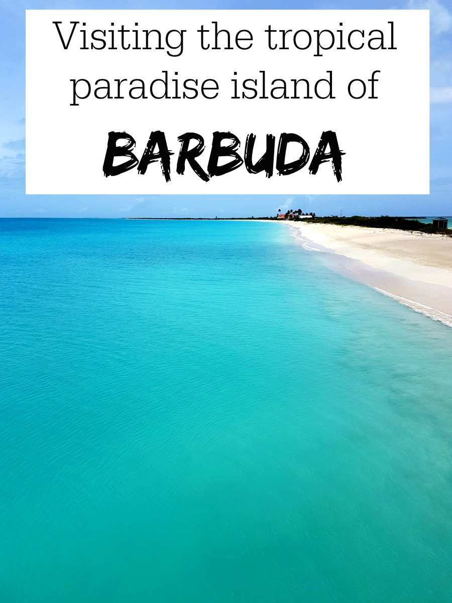 PIN FOR LATER: Visiting the beautiful tropical island of Barbuda! Barbuda is known for it's celebrity guests and perfect beaches. Find out how you can visit on a day trip from Antigua to see the famous pink beach and 17 mile beach!