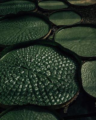 Czego dowiem się z liści rośliny domowej
