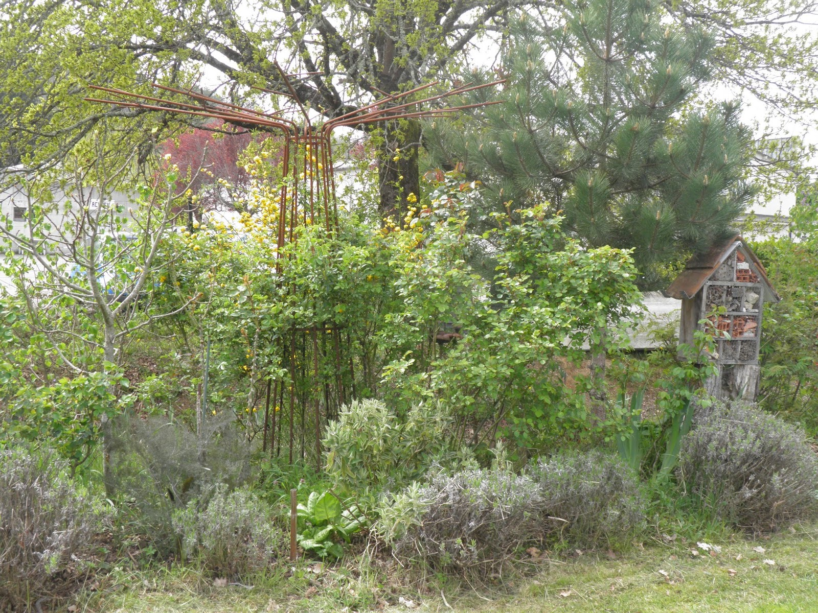 Mon Jardin En Avril mon jardin quercynois: petites scènes d'avril