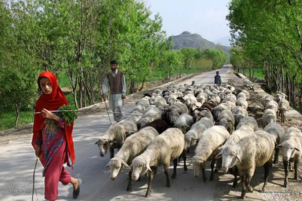 Shepherds along the Road to Swat, Pakistan