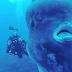 ΣΥΝΕΒΗ ΧΘΕΣ!!!Φοβερό περιστατικό στην ΖΑΚΥΝΘΟ:Δύτες είχαν ΤΡΟΜΑΚΤΙΚΗ συνάντηση με σπάνιο ΓΙΓΑΝΤΙΟ ψάρι 2,5 τόνους με το ύψος του να ξεπερνά τα 5 μέτρα!!!ΠΩΣ ΒΡΕΘΗΚΕ ΣΤΑ ΝΕΡΑ ΜΑΣ;;ΛΕΓΕΤΑΙ ΟΤΙ ΕΙΝΑΙ...είναι προάγγελος σεισμού..(ΧΘΕΣΙΝΟ ΒΙΝΤΕΟ LIVE)