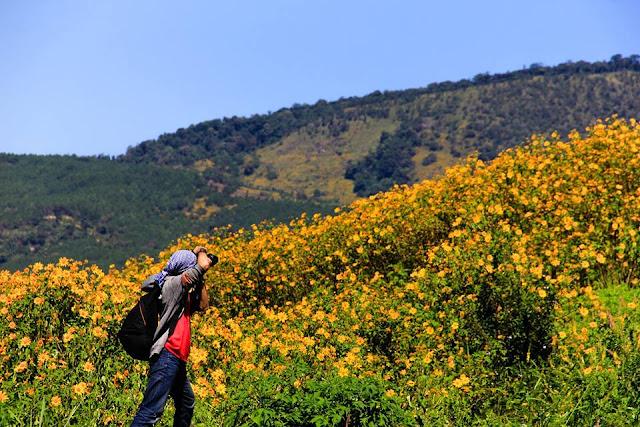 Chụp ảnh hoa dã quỳ Đà Lạt