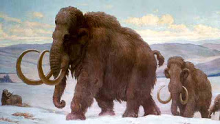 Extinction of woolly mammoth