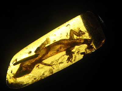 "Some Darwinoids are claiming that bird wings found in amber support evolution. Actually, evolutionists changed their own ""facts"" to accommodate the evidence."