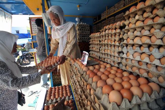 Pemerintah Diminta Tangani Naiknya Harga Telur
