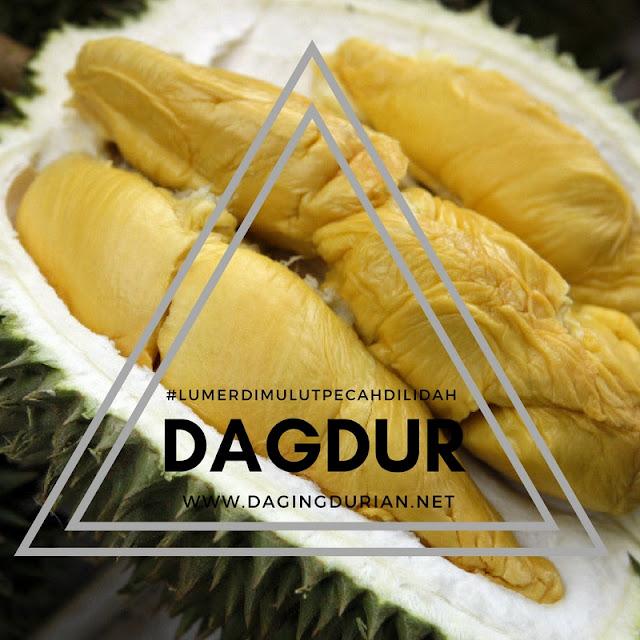 gudang-daging-durian-medan-berkelas-di-batauga