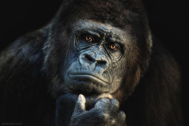 صور حيوانات جودة عالية HD