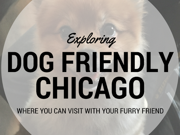 Dog Friendly Chicago