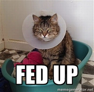 Fed up cat in care