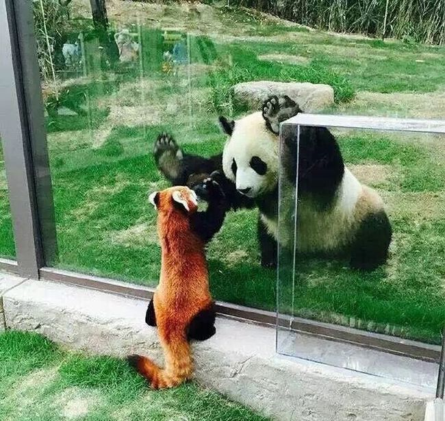 Funny animals of the week - 27 May 2016, funny animal photo, best funny animals, funny animal images