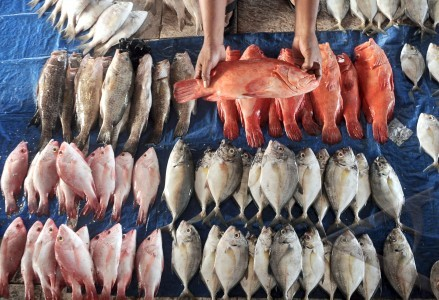 9 Cara Bisnis Usaha Jual Ikan Laut Konsumsi Yang Menguntungkan
