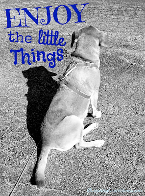 Take Time to Enjoy the Little Things - Sophie #RescueDog #HoundMix #SeniorDog ©LapdogCreations