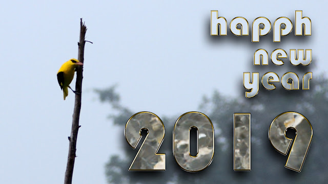 happy new year 2019 3d 4k images