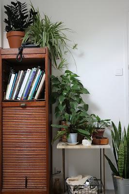 plantes dans l'entrée