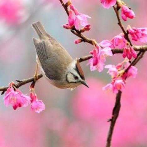 Pássaro em galho de flores.