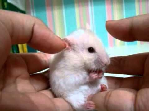 Bí ấn giấc mơ thấy chuột có ý nghĩa gì? -soicauxsmb.com