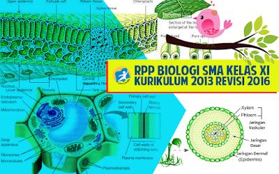 Download RPP Biologi SMA Kurikulum 2013 Kelas XI Revisi 2016