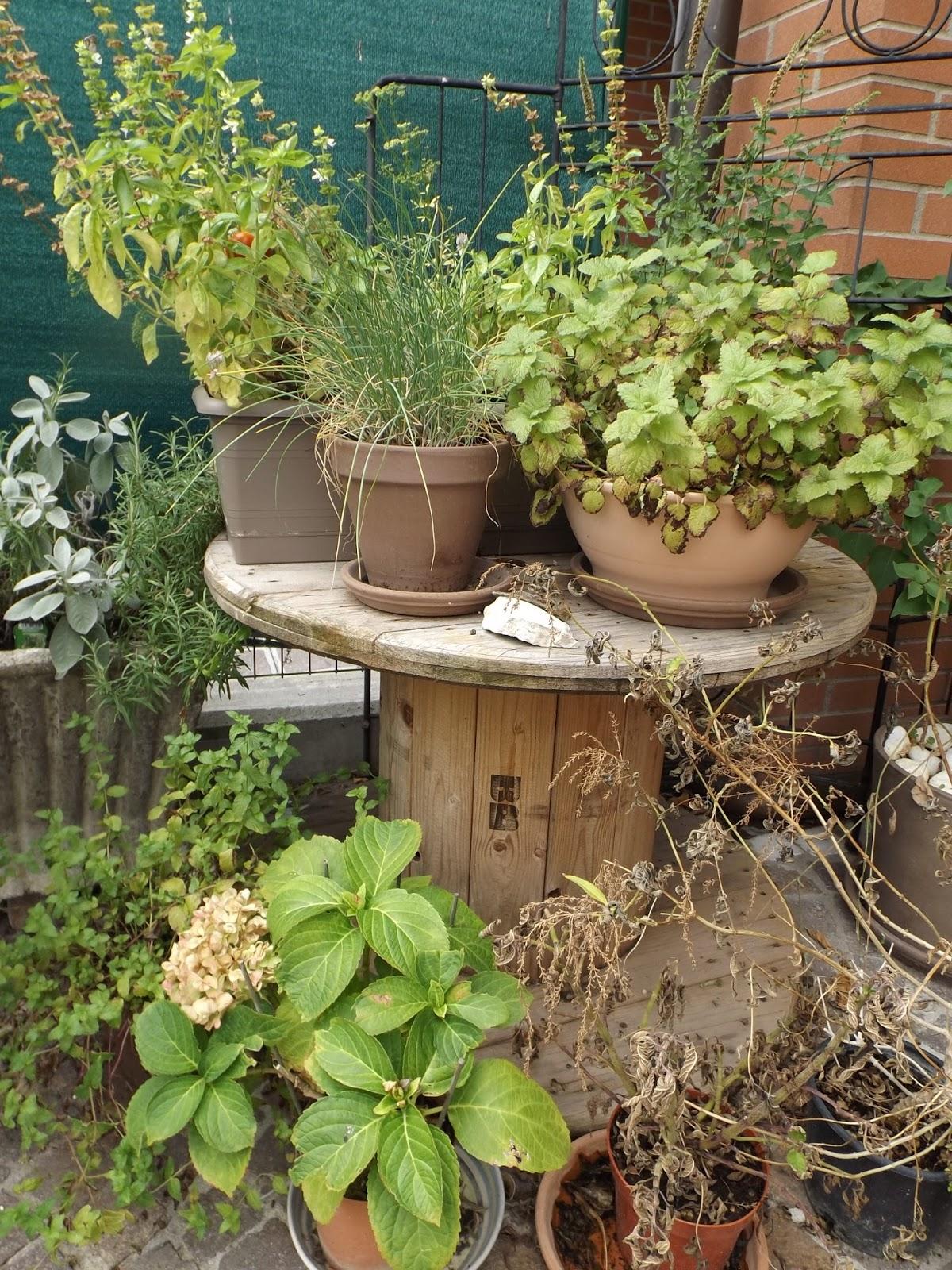 Giardino Di Una Casa la magia di un piccolo orto: il giardino di tito