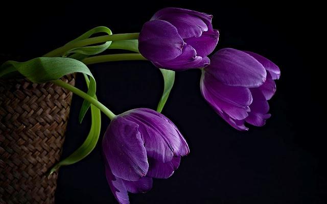 Paarse bloemen in een mand