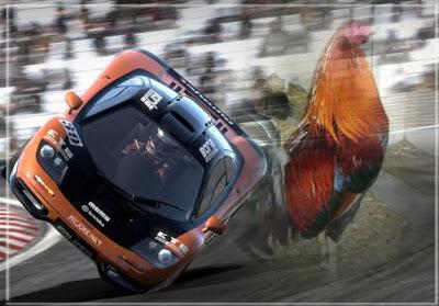 gallo en la carretera