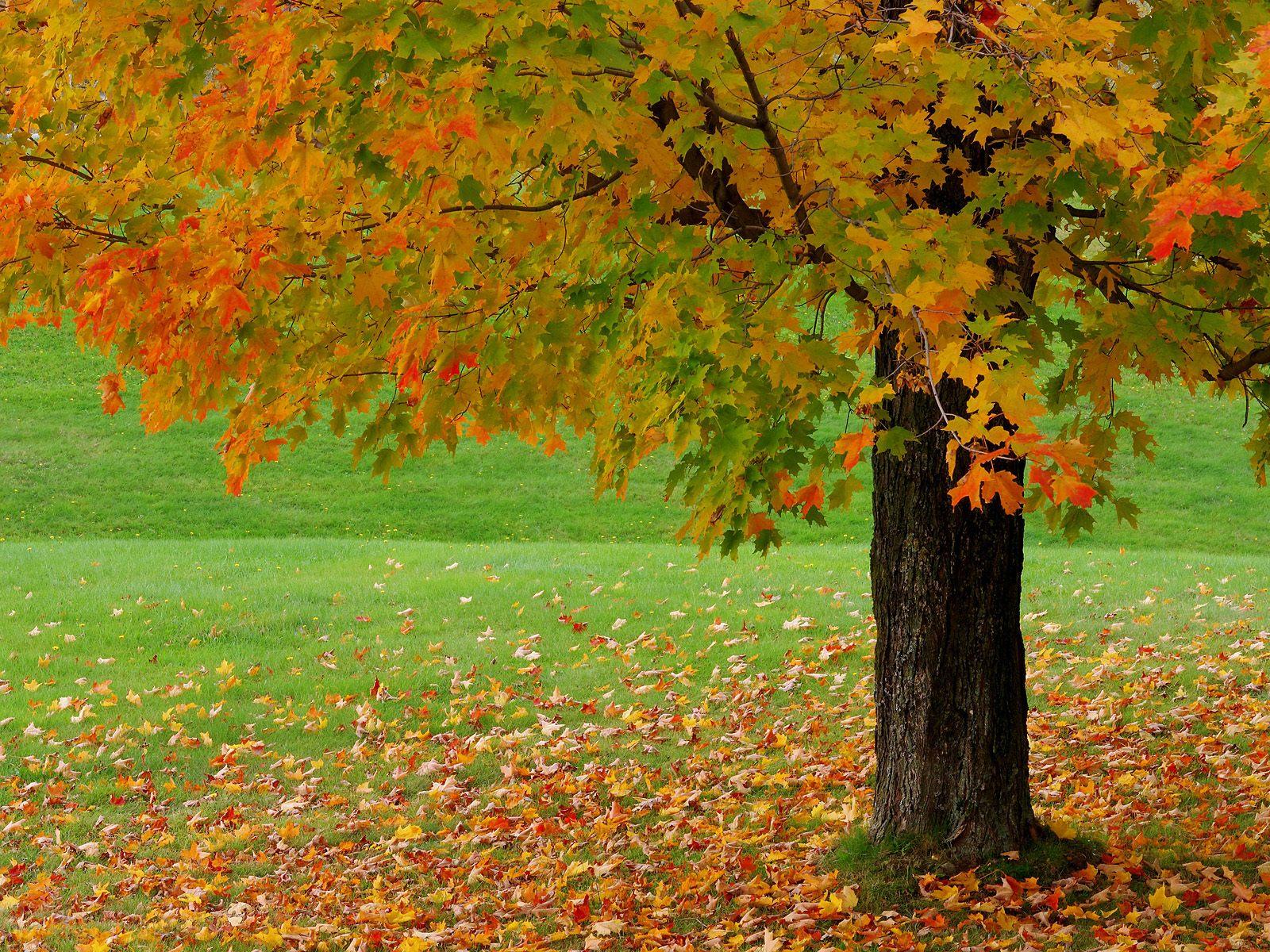 Nice's Wallpaper's Beautiful Autumn Season Wallpapers Hd