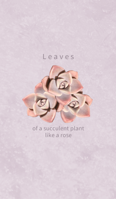 Leaves of a succulent plant like a rose