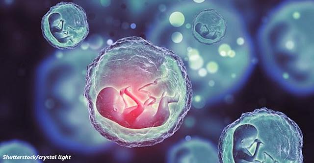 Сделали первый эмбрион без спермы и яйцеклетки! Дети будущего будут в инкубаторах?